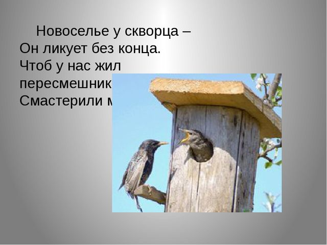 Новоселье у скворца – Он ликует без конца. Чтоб у нас жил пересмешник, Смас...