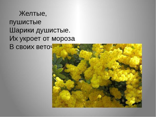 Желтые, пушистые Шарики душистые. Их укроет от мороза В своих веточках…