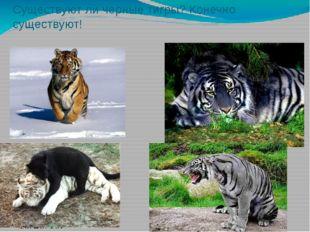 Существуют ли черные тигры? Конечно существуют! .