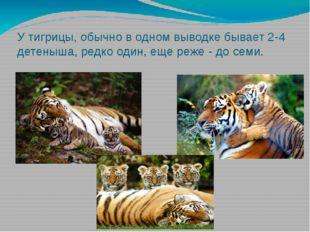 У тигрицы, обычно в одном выводке бывает 2-4 детеныша, редко один, еще реже -