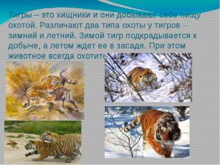 Тигры – это хищники и они добывают себе пищу охотой. Различают два типа охоты