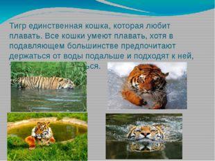 Тигр единственная кошка, которая любит плавать. Все кошки умеют плавать, хотя