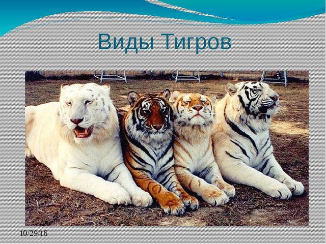 Виды Тигров