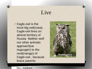 Live Eagle-owl is the most big owl(сова). Eagle-owl lives on almost territory