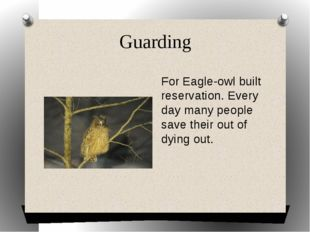 Guarding For Eagle-owl built reservation. Every day many people save their ou