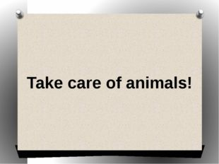 Take care of animals!