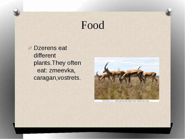 Food Dzerens eat different plants.They often eat: zmeevka, caragan,vostrets.
