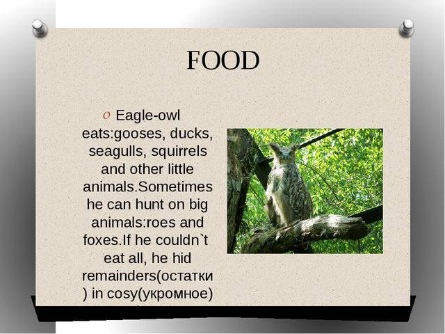 FOOD Eagle-owl eats:gooses, ducks, seagulls, squirrels and other little anima...