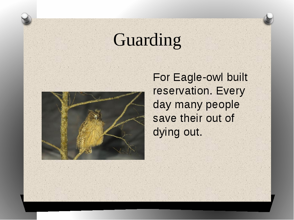 Guarding For Eagle-owl built reservation. Every day many people save their ou...