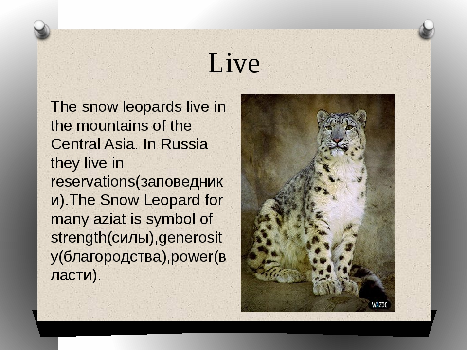 Live The snow leopards live in the mountains of the Central Asia. In Russia t...