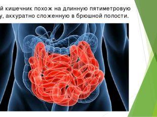Тонкий кишечник похож на длинную пятиметровую трубку, аккуратно сложенную в б