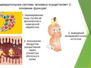 Пищеварительная система человека осуществляет 3 основные функции: 1. перевари