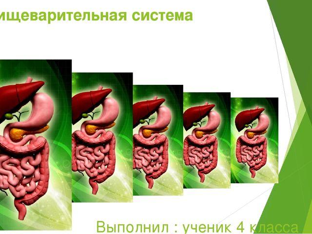 Пищеварительная система Выполнил : ученик 4 класса Митупов Марат