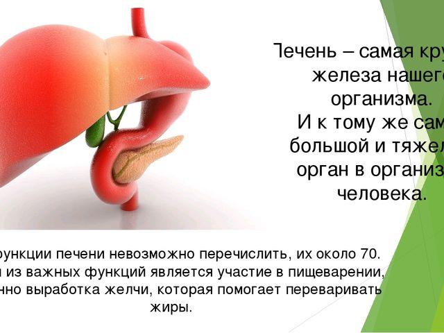 Печень – самая крупная железа нашего организма. И к тому же самый большой и т...