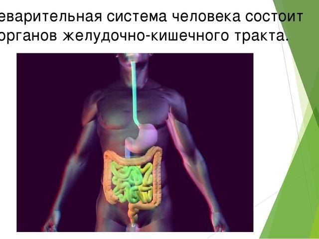Пищеварительная система человека состоит из органов желудочно-кишечного тракта.