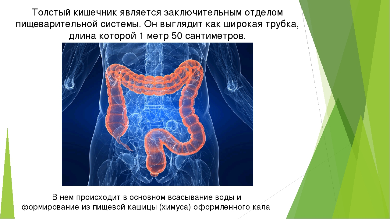 Толстый кишечник является заключительным отделом пищеварительной системы. Он...
