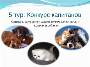 5 тур: Конкурс капитанов Капитаны друг другу задают шуточные вопросы о кошках