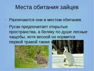 Места обитания зайцев Различаются они и местом обитания. Русак предпочитает о