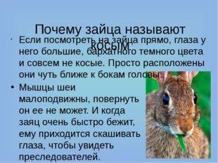 Почему зайца называют косым Если посмотреть на зайца прямо, глаза у него бол