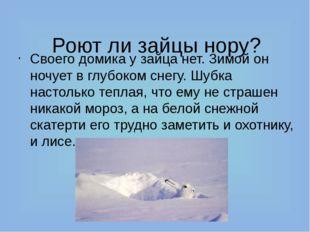 Роют ли зайцы нору? Своего домика у зайца нет. Зимой он ночует в глубоком сн