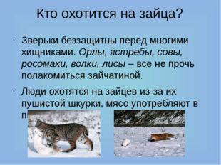 Кто охотится на зайца? Зверьки беззащитны перед многими хищниками. Орлы, ястр