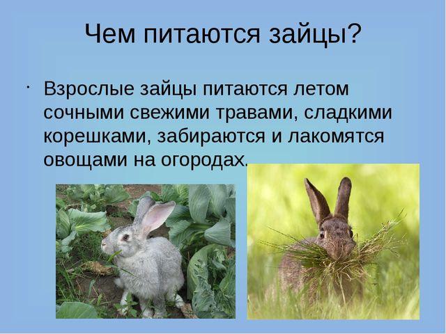 Чем питаются зайцы? Взрослые зайцы питаются летом сочными свежими травами, сл...