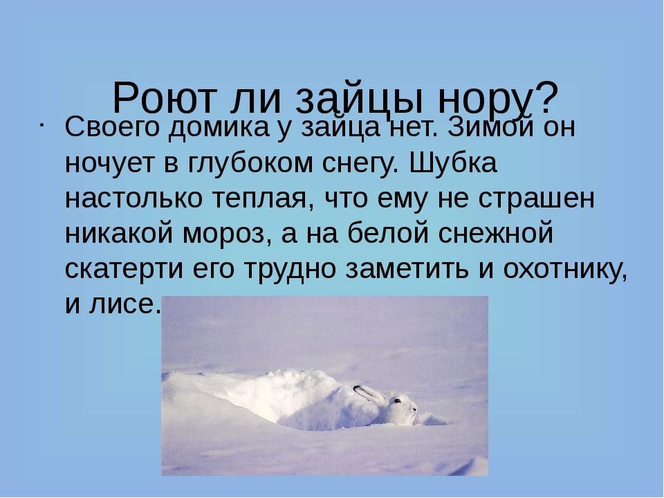 Роют ли зайцы нору? Своего домика у зайца нет. Зимой он ночует в глубоком сн...