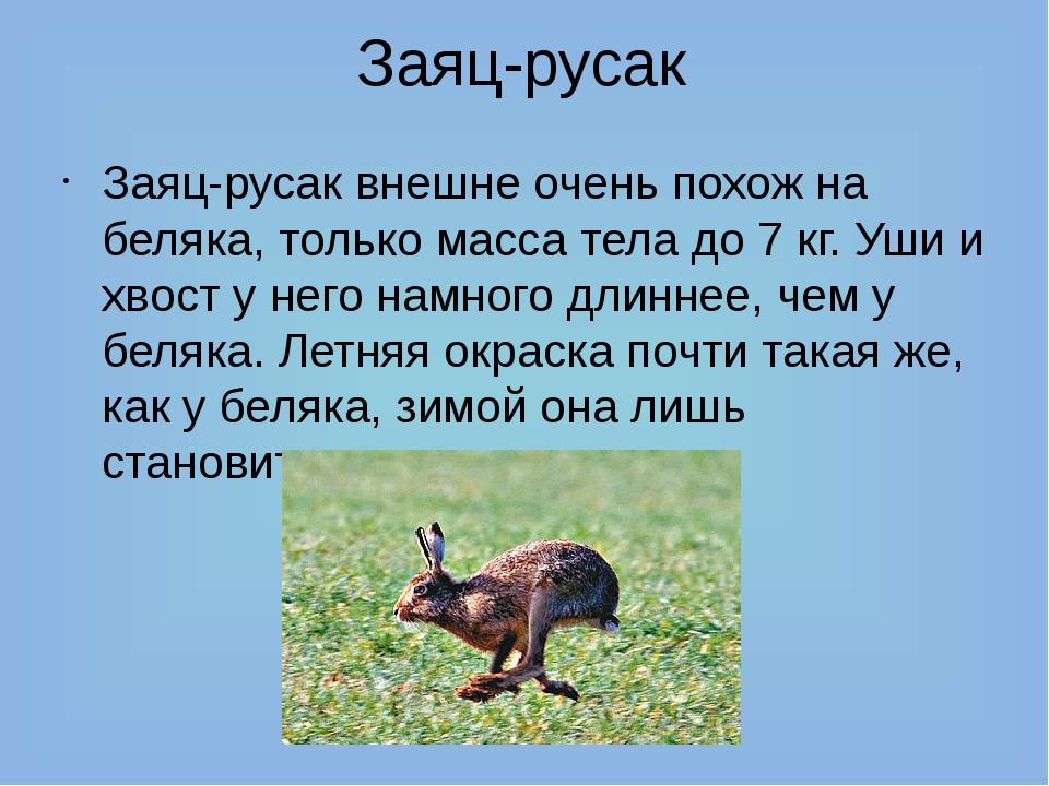 Заяц-русак Заяц-русак внешне очень похож на беляка, только масса тела до 7 кг...