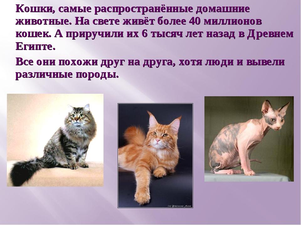 Кошки, самые распространённые домашние животные. На свете живёт более 40 милл...