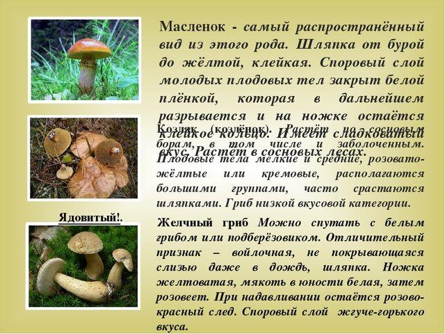 Козляк (козлёнок). Растёт по сосновым борам, в том числе и заболоченным. Плод...