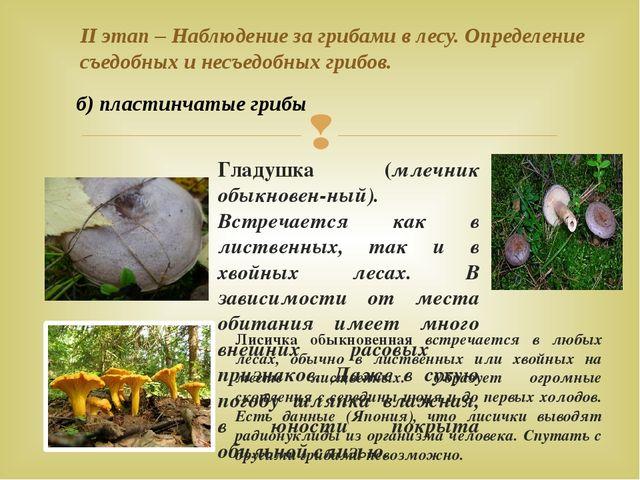 II этап – Наблюдение за грибами в лесу. Определение съедобных и несъедобных г...