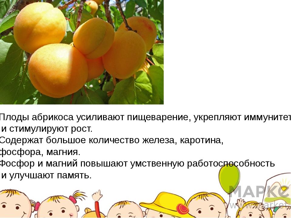 Плоды абрикоса усиливают пищеварение, укрепляют иммунитет и стимулируют рост....