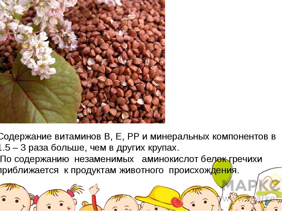 Содержание витаминов В, Е, РР и минеральных компонентов в 1.5 – 3 раза больше...