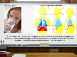 Как мы пьём? Работа органов дыхания За счет мышечного усилия мы увеличиваем о