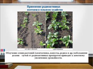 Облучение семян растений (хлопчатника, капусты, редиса и др.) небольшими доза