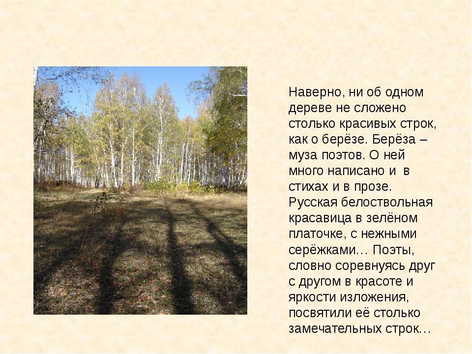 Наверно, ни об одном дереве не сложено столько красивых строк, как о берёзе....