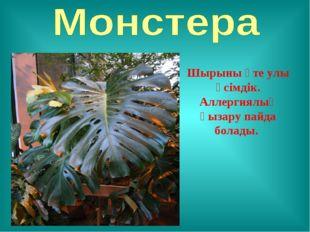 Шырыны өте улы өсімдік. Аллергиялық қызару пайда болады.