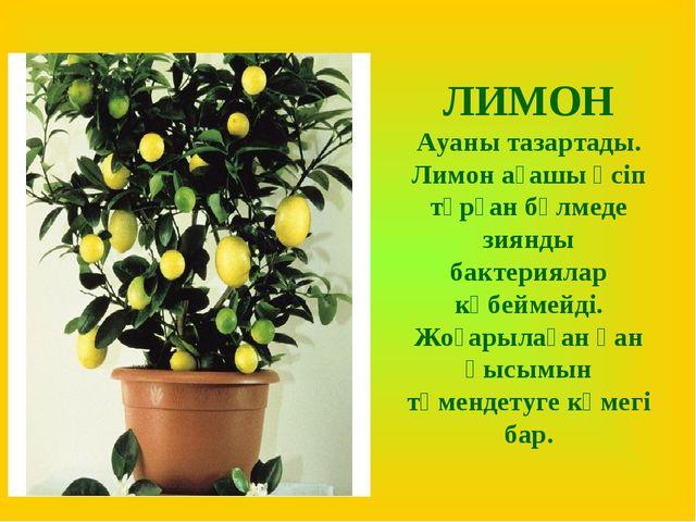 ЛИМОН Ауаны тазартады. Лимон ағашы өсіп тұрған бөлмеде зиянды бактериялар көб...