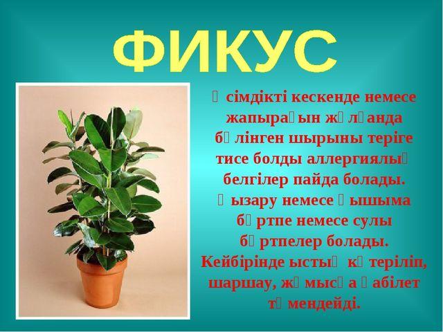 Өсімдікті кескенде немесе жапырағын жұлғанда бөлінген шырыны теріге тисе болд...