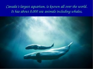 Canada's largest aquarium, is known all over the world. It has about 8,000 se