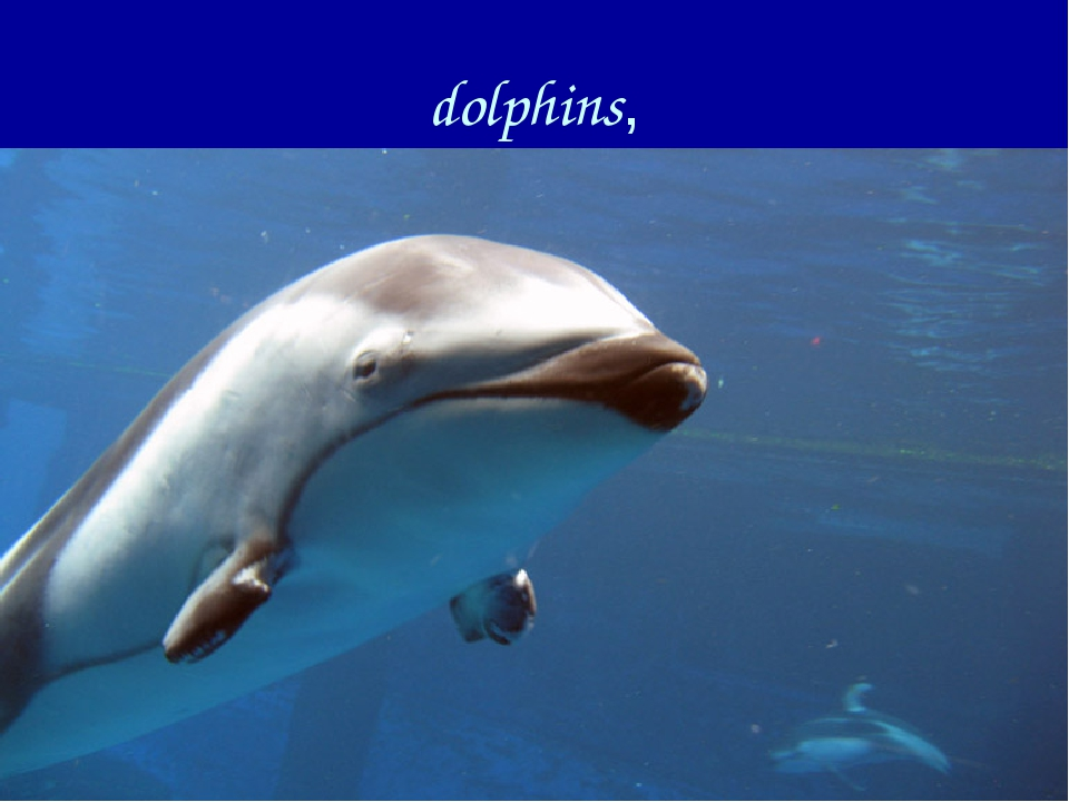 dolphins,