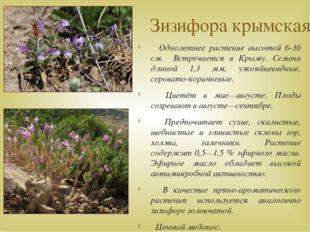 Зизифора крымская Однолетнее растение высотой 6-30 см. Встречается в Крыму. С