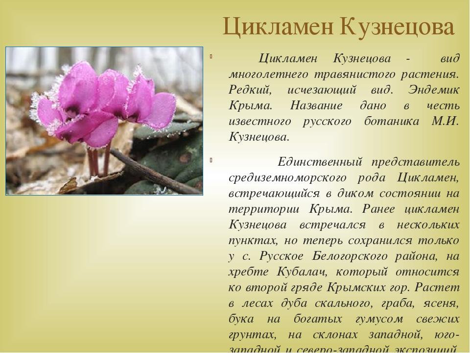 Цикламен Кузнецова Цикламен Кузнецова - вид многолетнего травянистого растени...