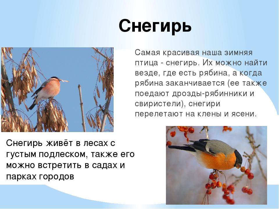 картинки и рассказы про птиц необходимо уяснить, что