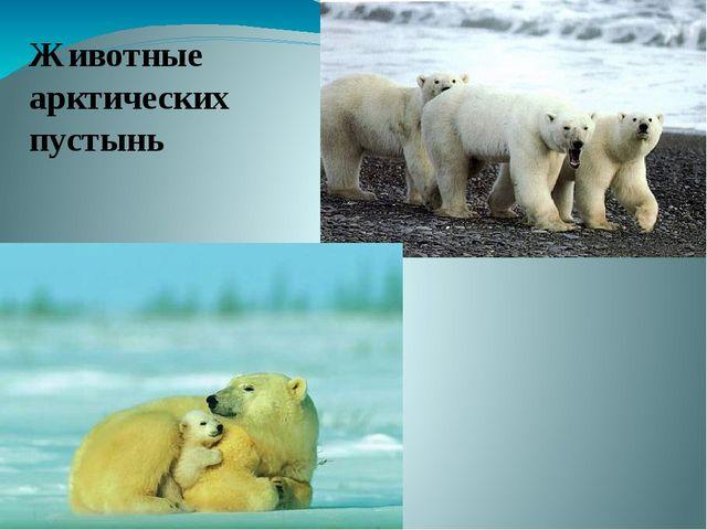 Животные арктических пустынь