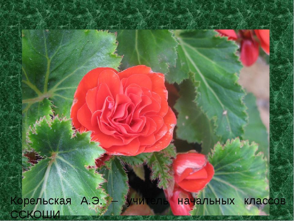 Комнатные растения Корельская А.Э. – учитель начальных классов ССКОШИ