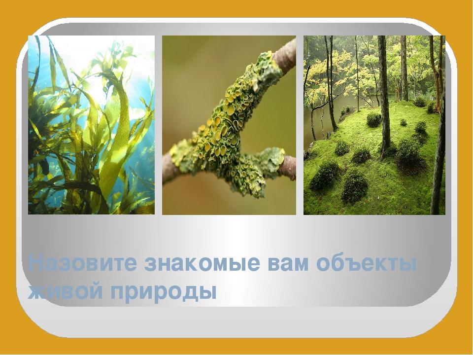 Назовите знакомые вам объекты живой природы