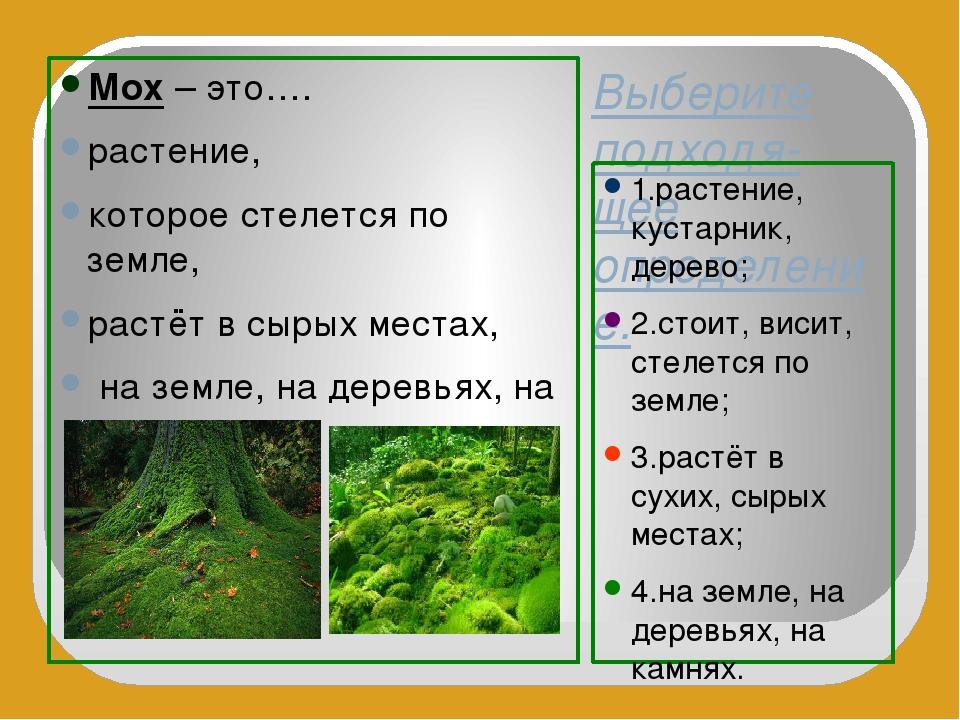 Выберите подходя-щее определение. 1.растение, кустарник, дерево; 2.стоит, вис...