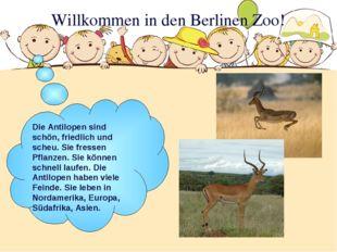 Willkommen in den Berlinen Zoo! Die Antilopen sind schön, friedlich und scheu