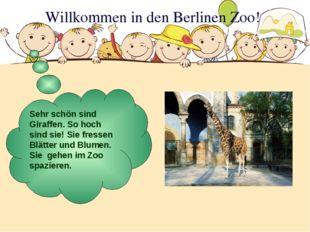 Willkommen in den Berlinen Zoo! Sehr schön sind Giraffen. So hoch sind sie! S